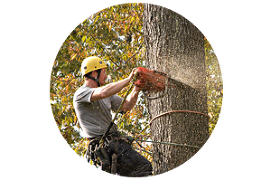 Tree Removals Duluth MN